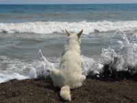 Большой лохматый пёс...