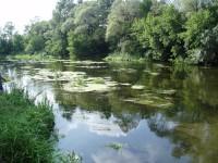 Оскол-река. Белгородская область, Новооскольский район