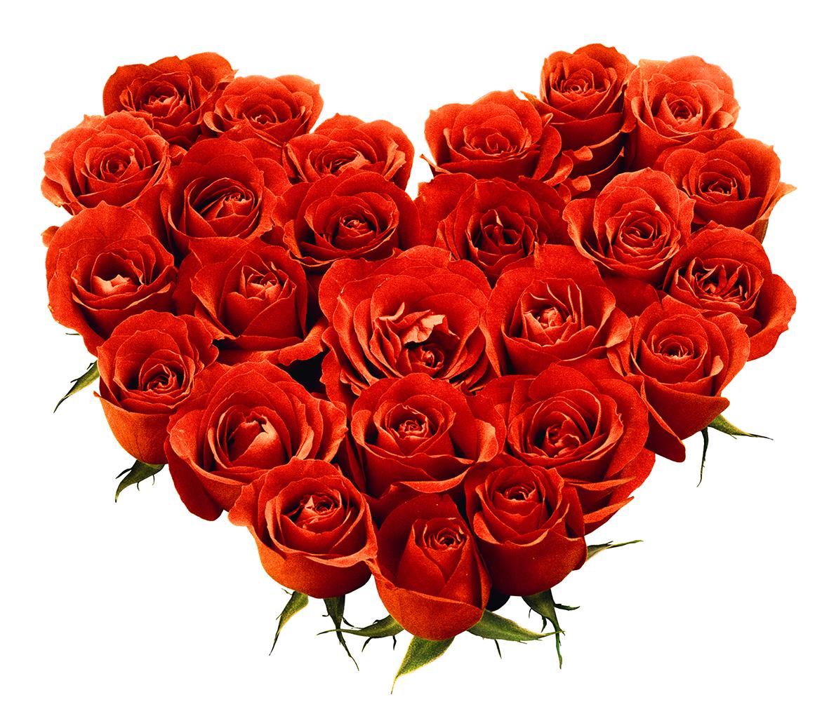 rose_PNG642